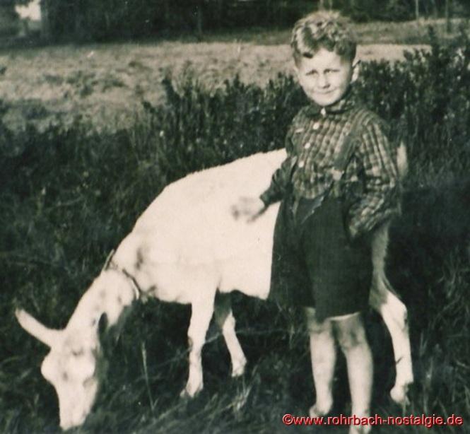 Um 1949 - Der kleine Alois Lesch beim Geißenhüten auf der Siedlung