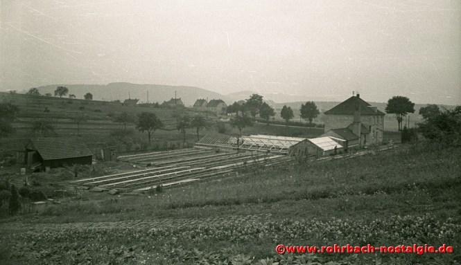 Blick vom Mühlenwäldchen auf die letzten Häuser der Schlawerie. Im Vordergrund die Gärtnerei Stuppi. Heute stehen dort zwei Hochhäuser